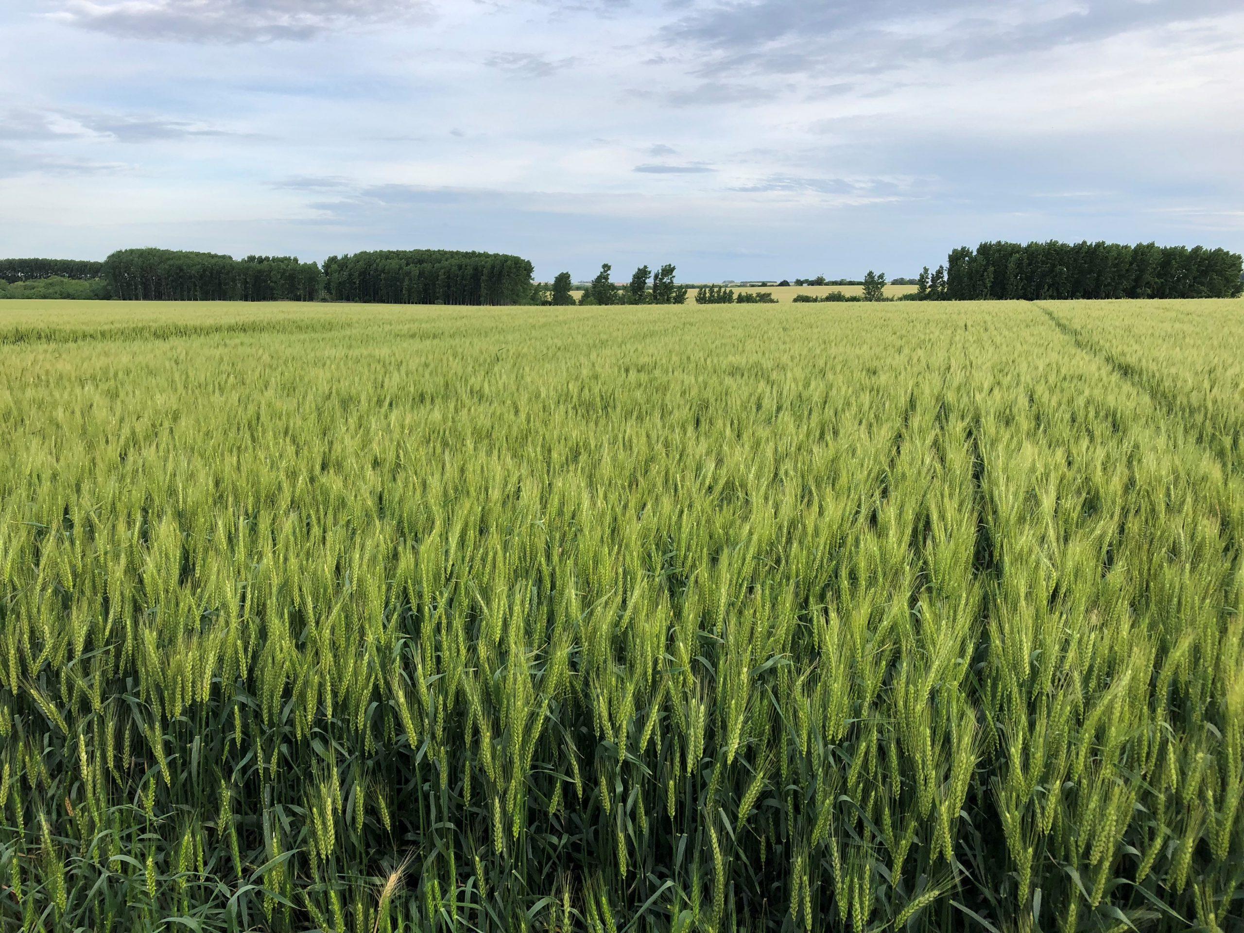 Especialistas analizaron las claves para potenciar el sector agropecuario en la 6ta edición de ADP Zone